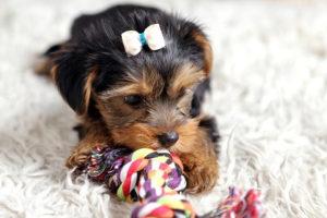 Pup Box