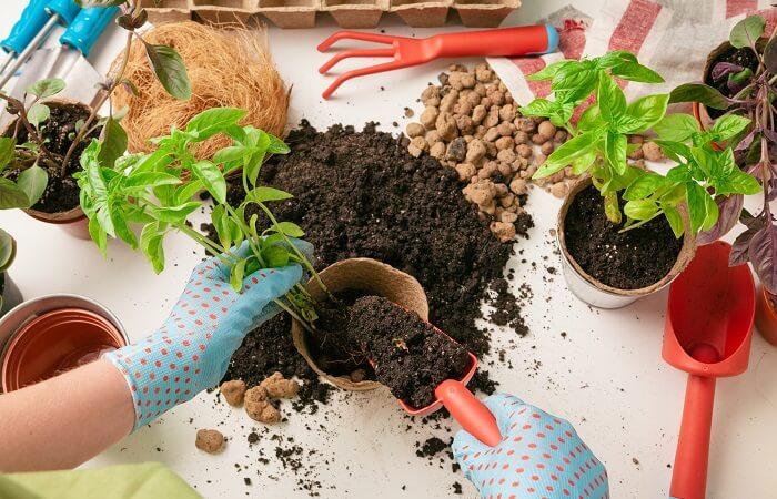 plants that keep bugs away 10