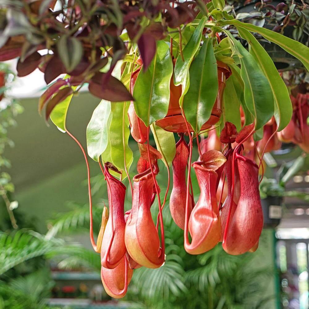 plants that keep bugs away 2