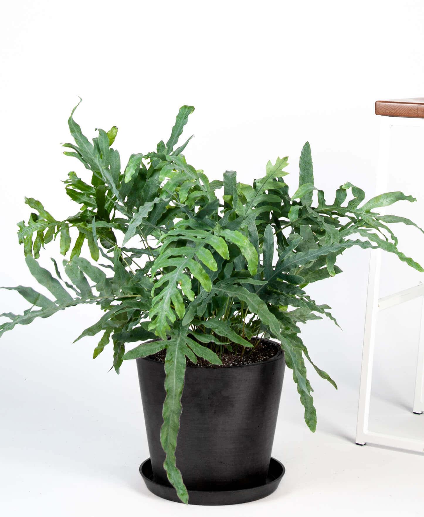 plants that keep bugs away 5