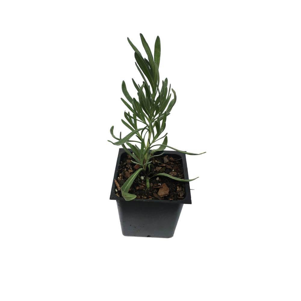 plants that keep bugs away 6